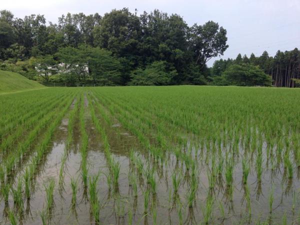 20140616kitafunaji6.jpg