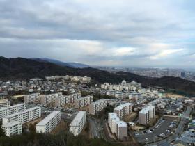 20150124suma5.jpg