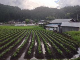 20151226nakatugawa4.jpg