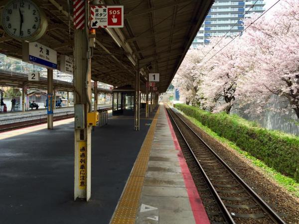 20160406sakura1.jpg