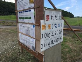 20170914ikadachi5.jpg