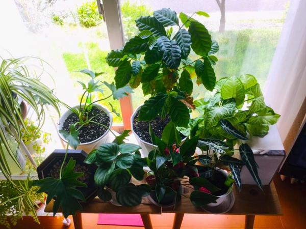 20190801-foliageplant1.jpg