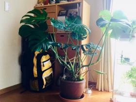 20190801-foliageplant2.jpg