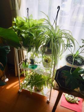 20190801-foliageplant3.jpg